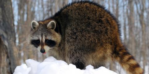 Rocky Mountain Wildlife Services image 0