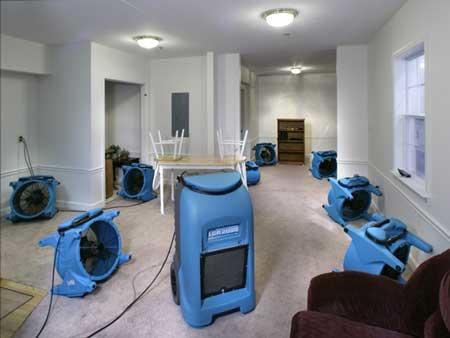 Elite Carpet Cleaning Service