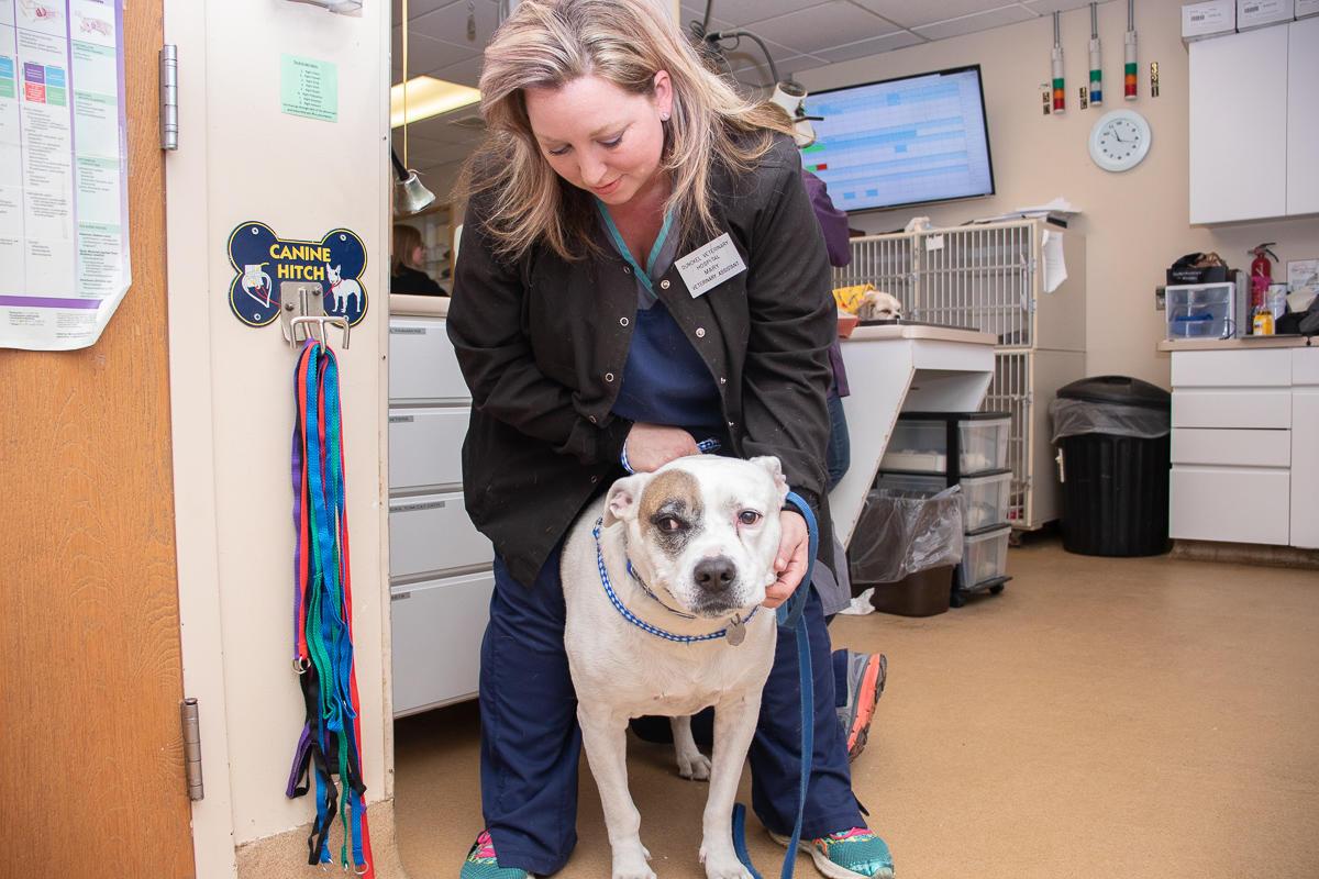 Dunckel Veterinary Hospital image 0