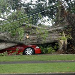 A&A Tree Service image 7