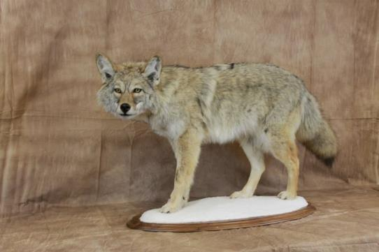 Dave's School Of Taxidermy image 6