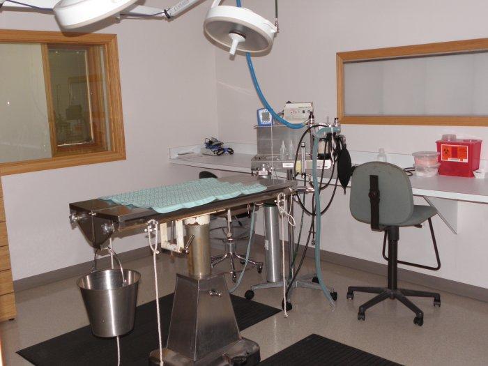 VCA Shadeland Animal Hospital image 5
