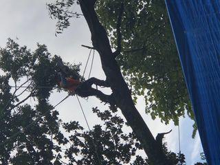 Indigo Professional Tree Service