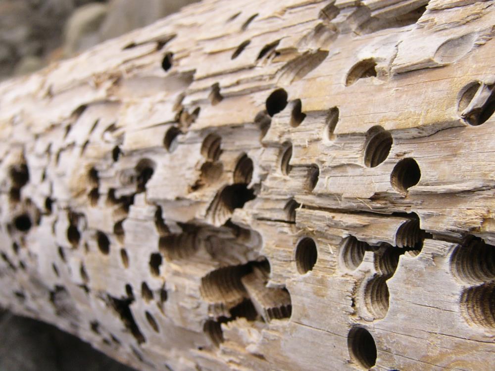 Combat Termite Specialist image 0