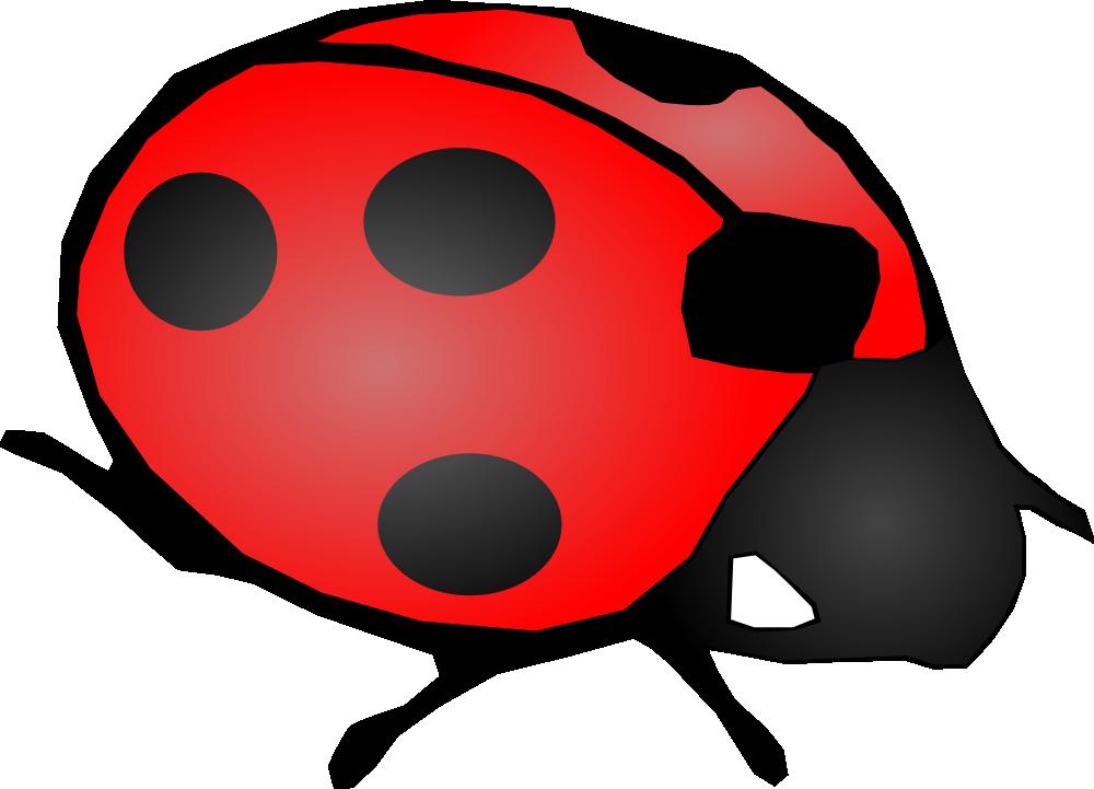 SEW Pest Control image 0
