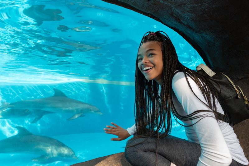 SeaWorld Orlando image 2