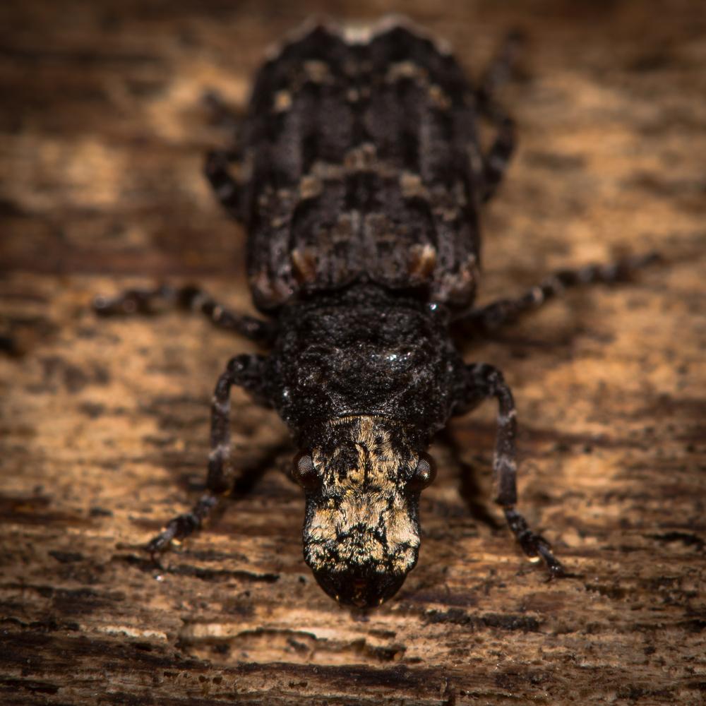 Leverett's Pest Control image 6