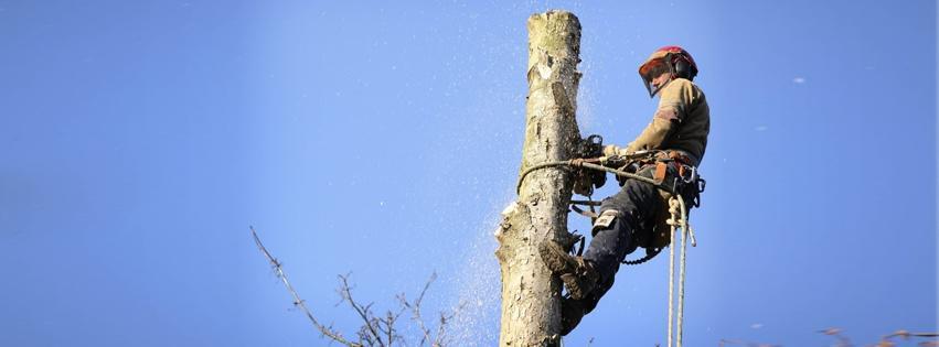 Andersen Tree Experts image 3