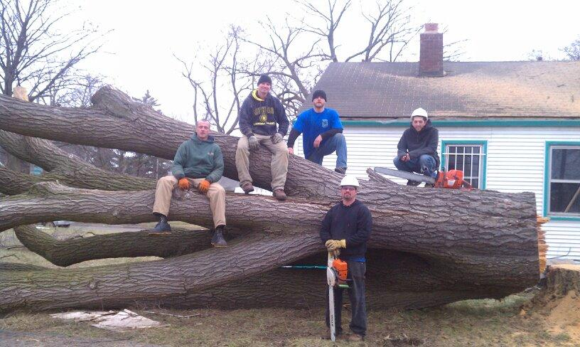 spears tree service image 12