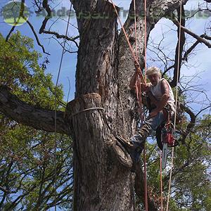 Andersen Tree Experts image 2