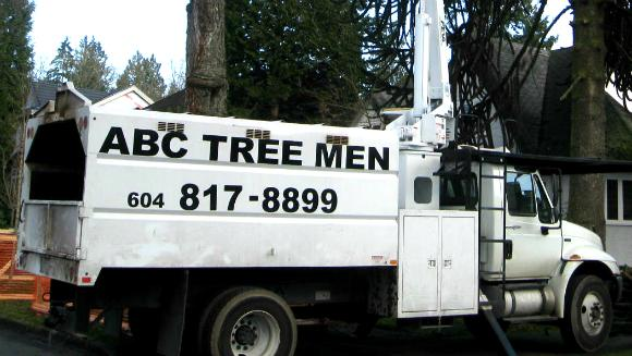 A B C Tree Men in Burnaby
