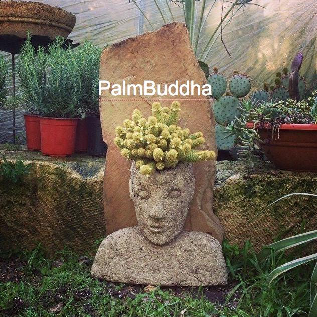 PalmBuddha - San Antonio, TX - Landscape Architects & Design