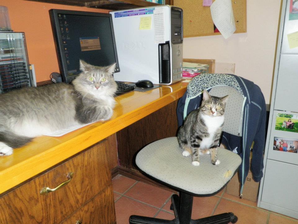 Pet Station image 0