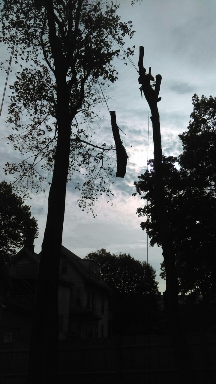 Schwan's Tree Care image 2