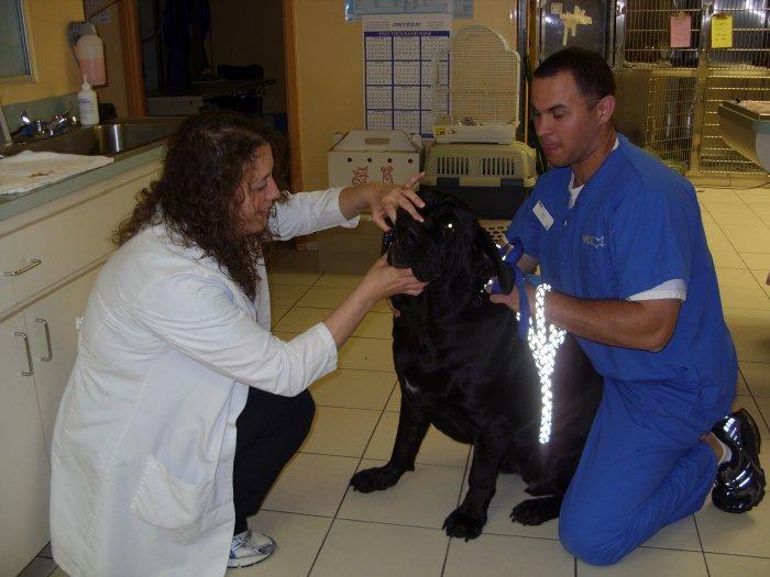 VCA Boca Greens Animal Hospital image 5