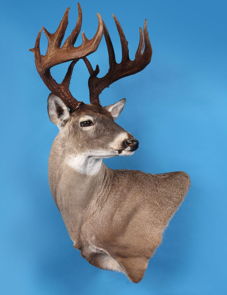 Buck's Taxidermy image 0