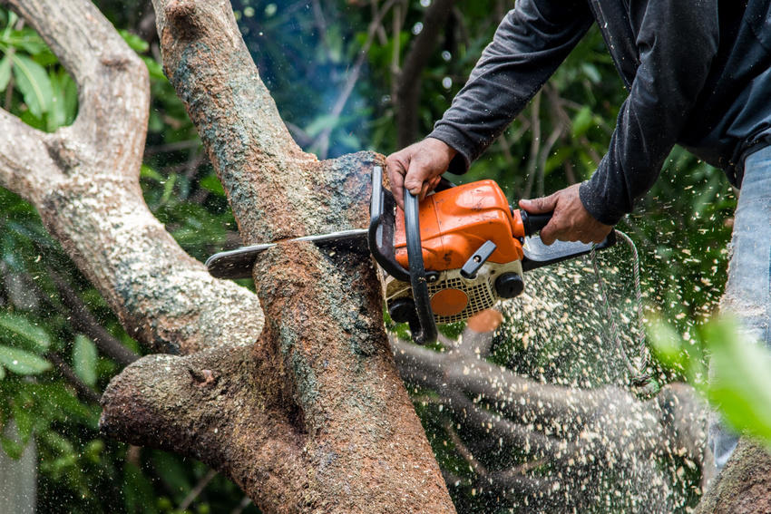 ROSS TREE SERVICE LLC image 5