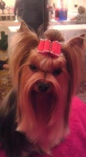 Creative Dog Grooming image 2