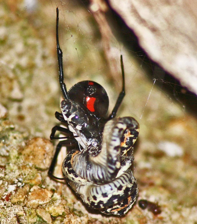 Walker Pest Management image 4