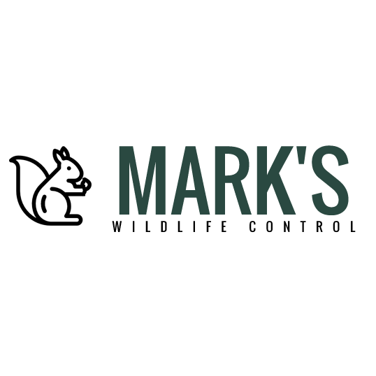 Mark's Wildlife Control image 0