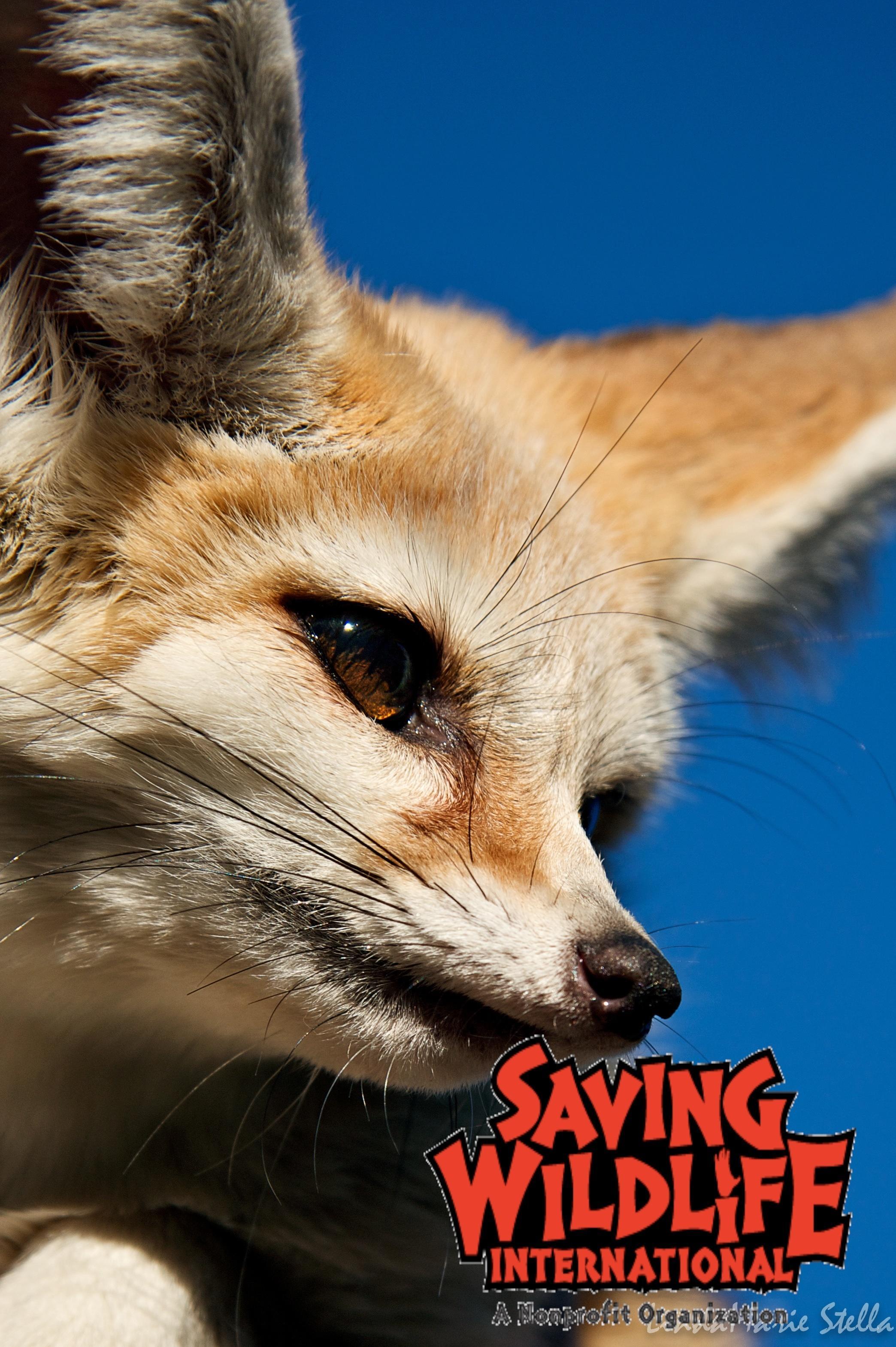 Saving Wildlife International image 5