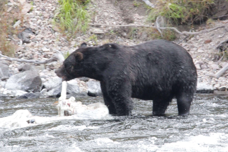 Yellowstone Tours From Jackson Hole image 4
