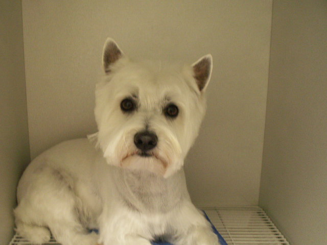 Just Great Grooming image 6