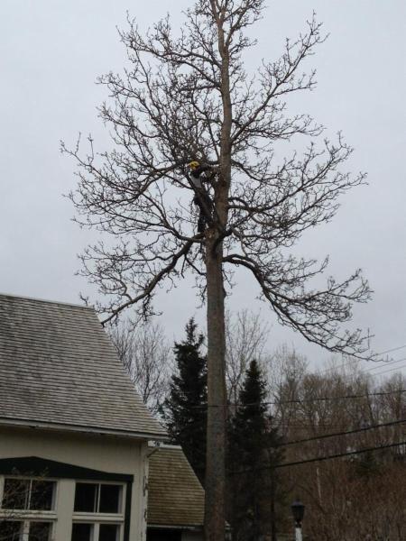 Arboriculture Thibault à Québec