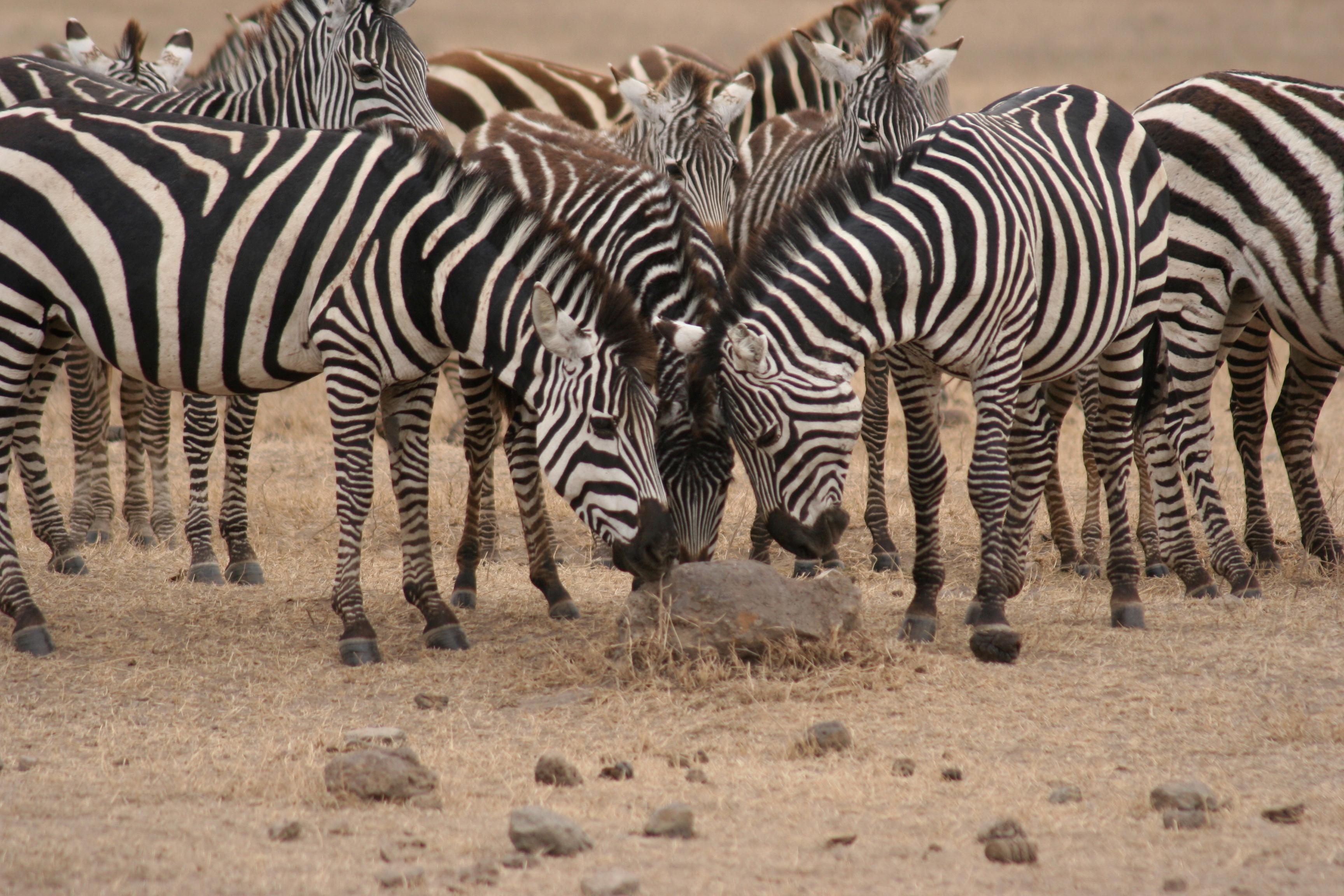 Infinite Safari Adventures image 3