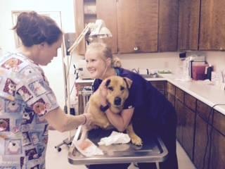 Houston Veterinary Clinic image 2