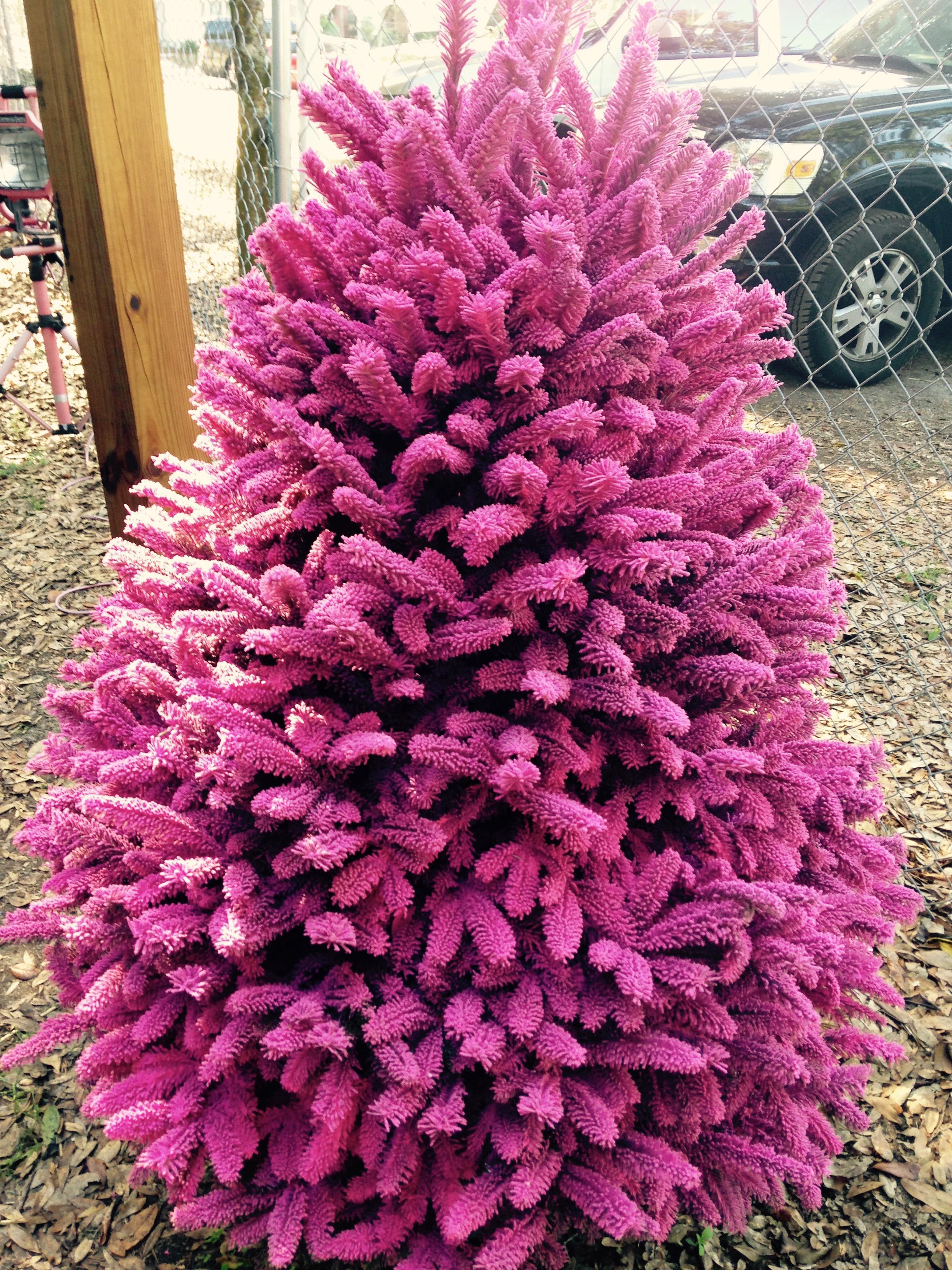 Dave's Christmas Tree Lot image 15