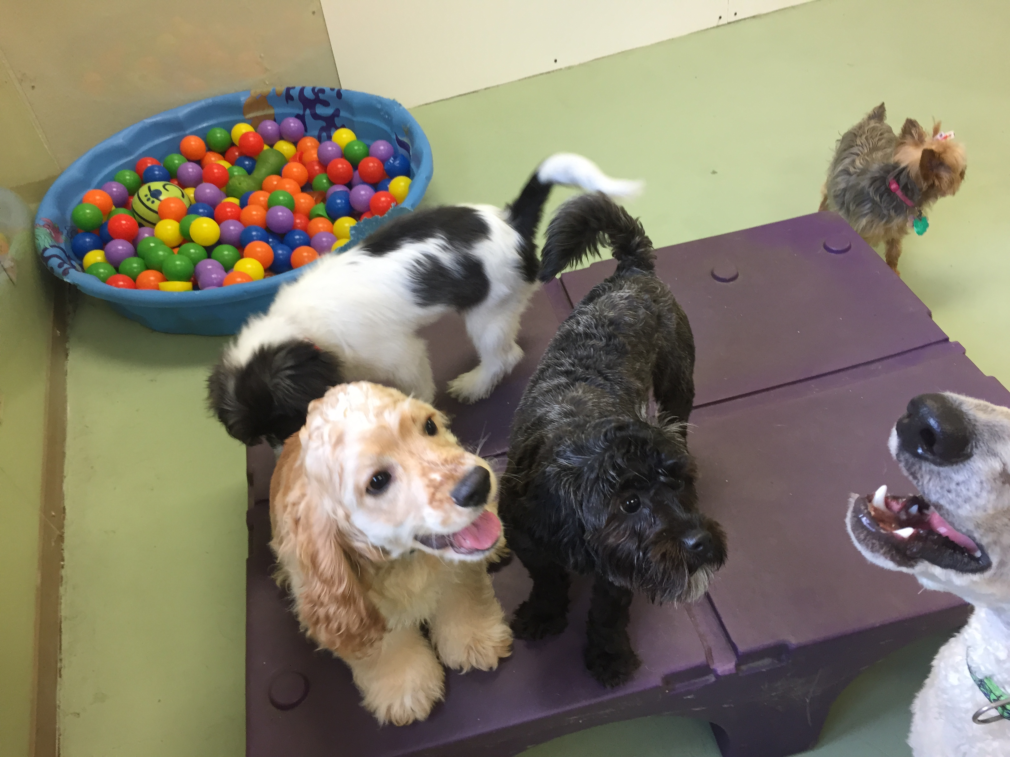 Jagger's Doggie Daycare, Dog Grooming, Training & Boarding image 18