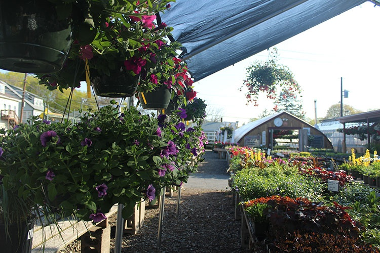 Little Brook Farm Garden In Saugus Ma 01906 Citysearch