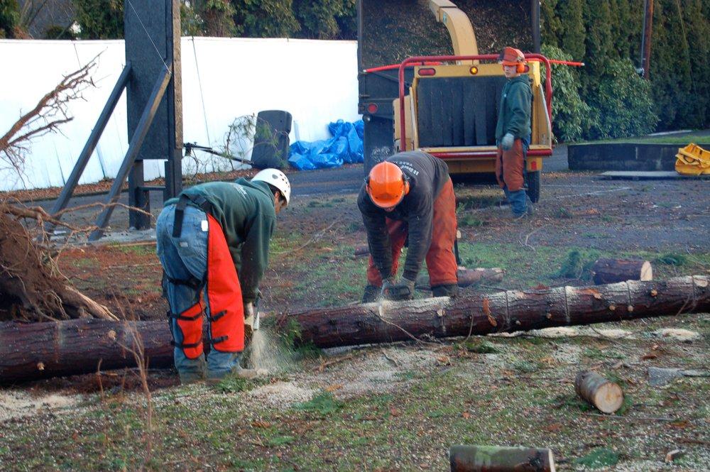 Wind Thin Tree Service Inc. image 8