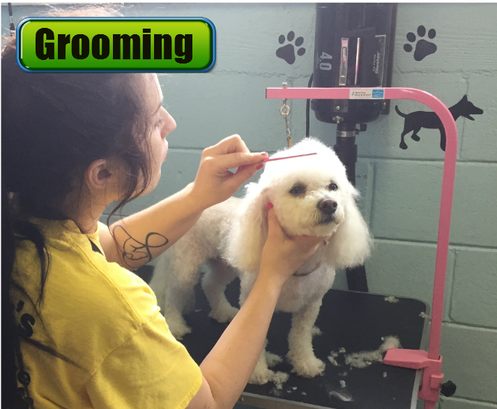 Jagger's Doggie Daycare, Dog Grooming, Training & Boarding image 2