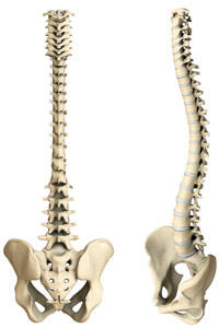 Dynamic Chiropractic Clinic