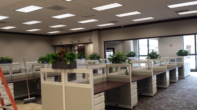 Plant Colony - Interior Plant Service