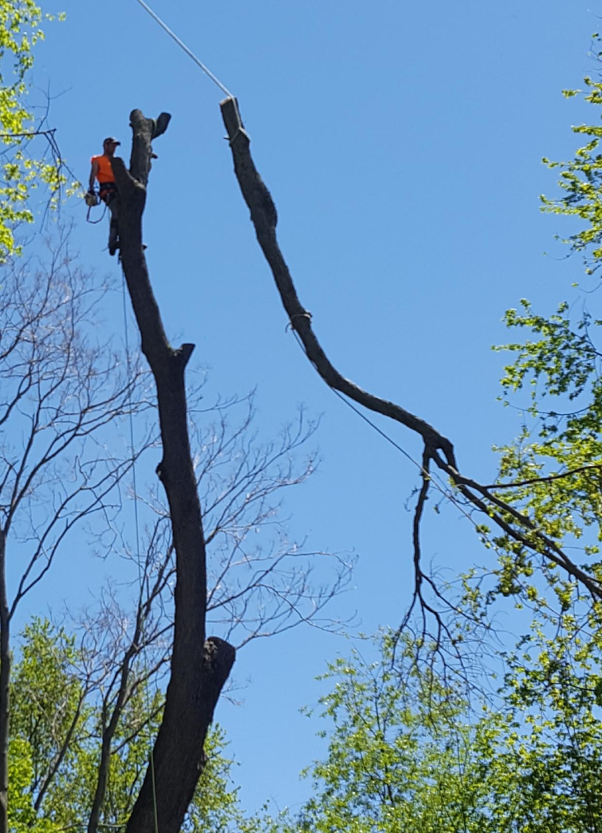 Coffman's Tree Service image 35