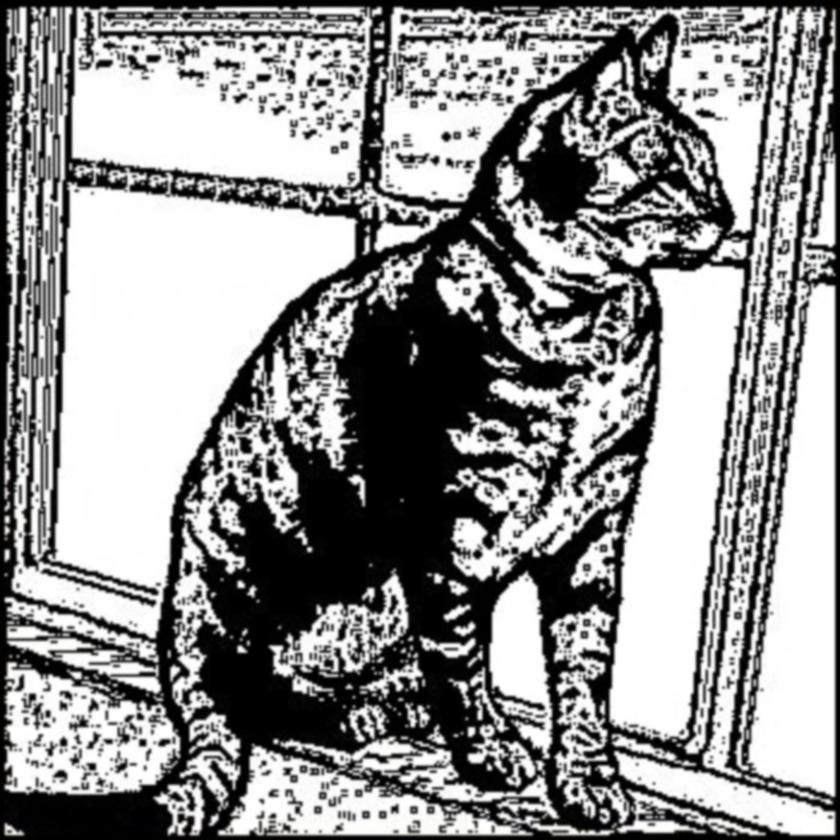 The Cat Practice