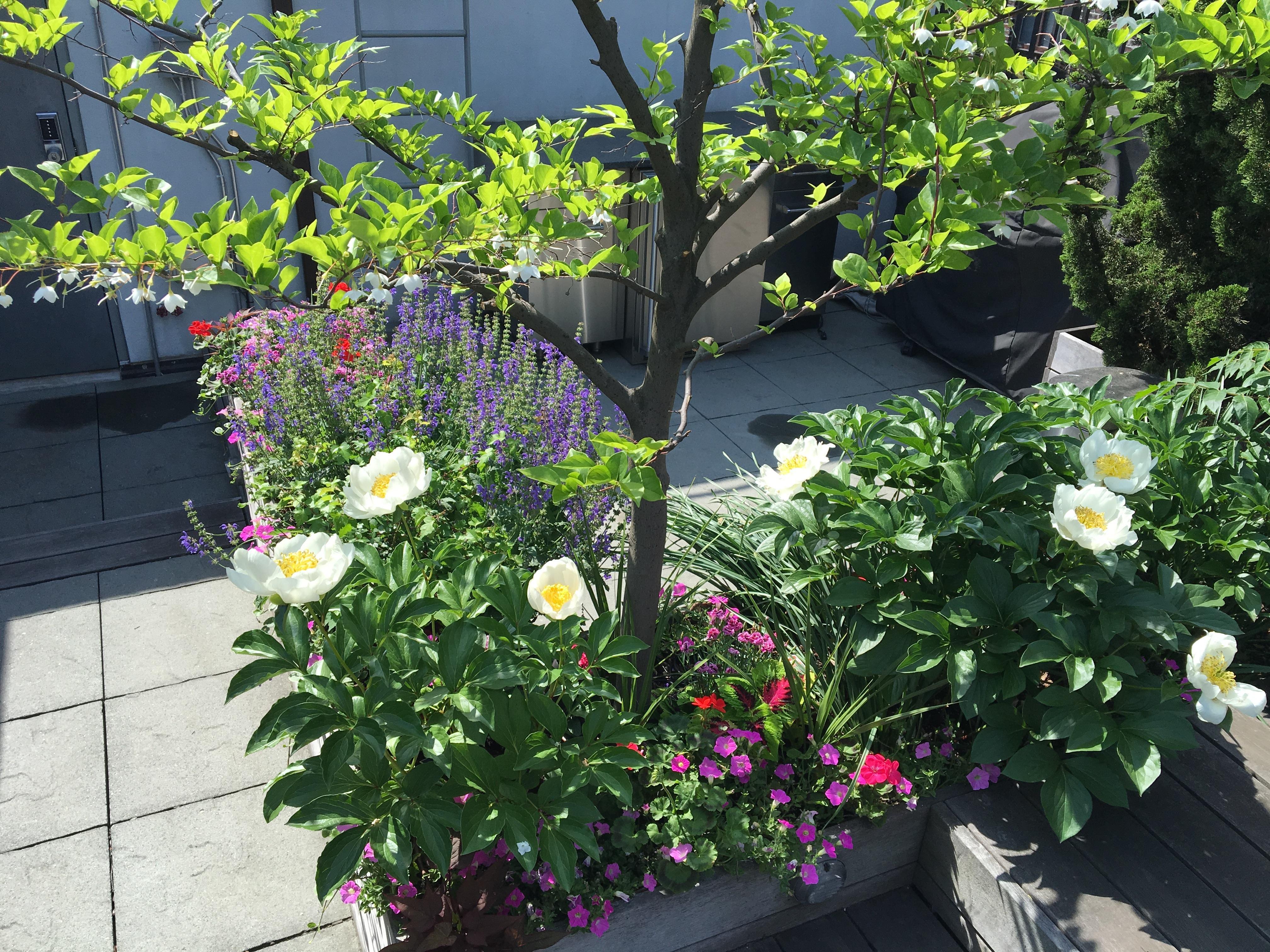 Metropolitan garden design coupons near me in new york for Garden designers near me