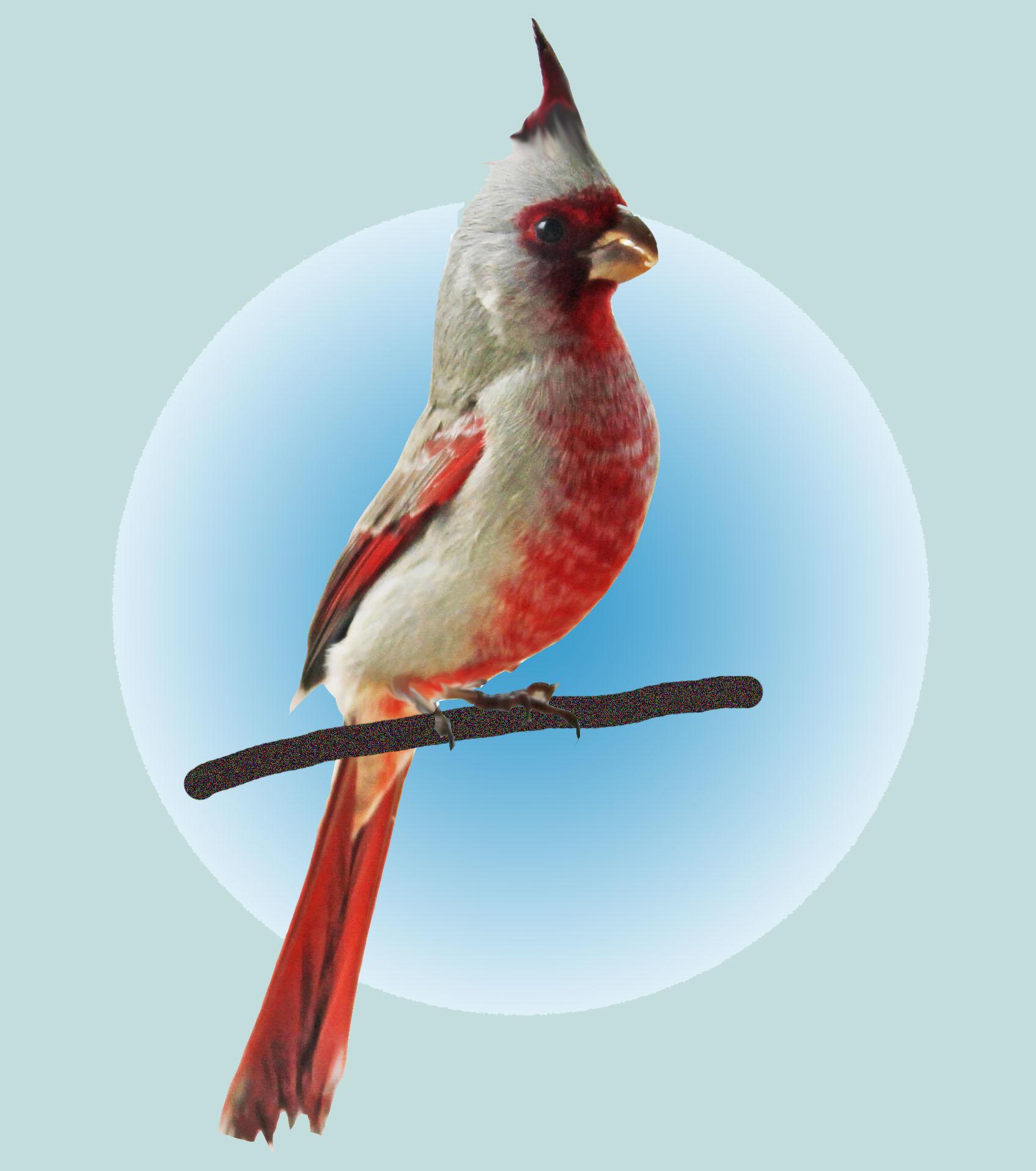 Cardinal Support LLC image 1