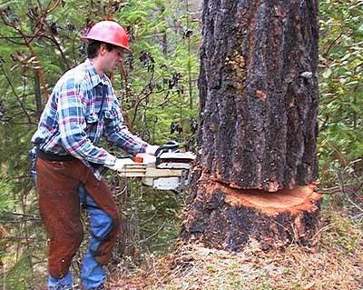 Ron's Tree Service image 0