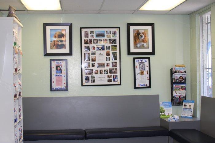 VCA La Mirada Animal Hospital image 1