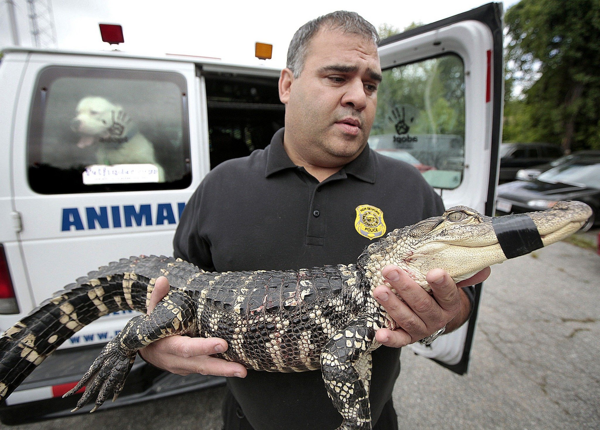 A All Animal Control of Madison image 1