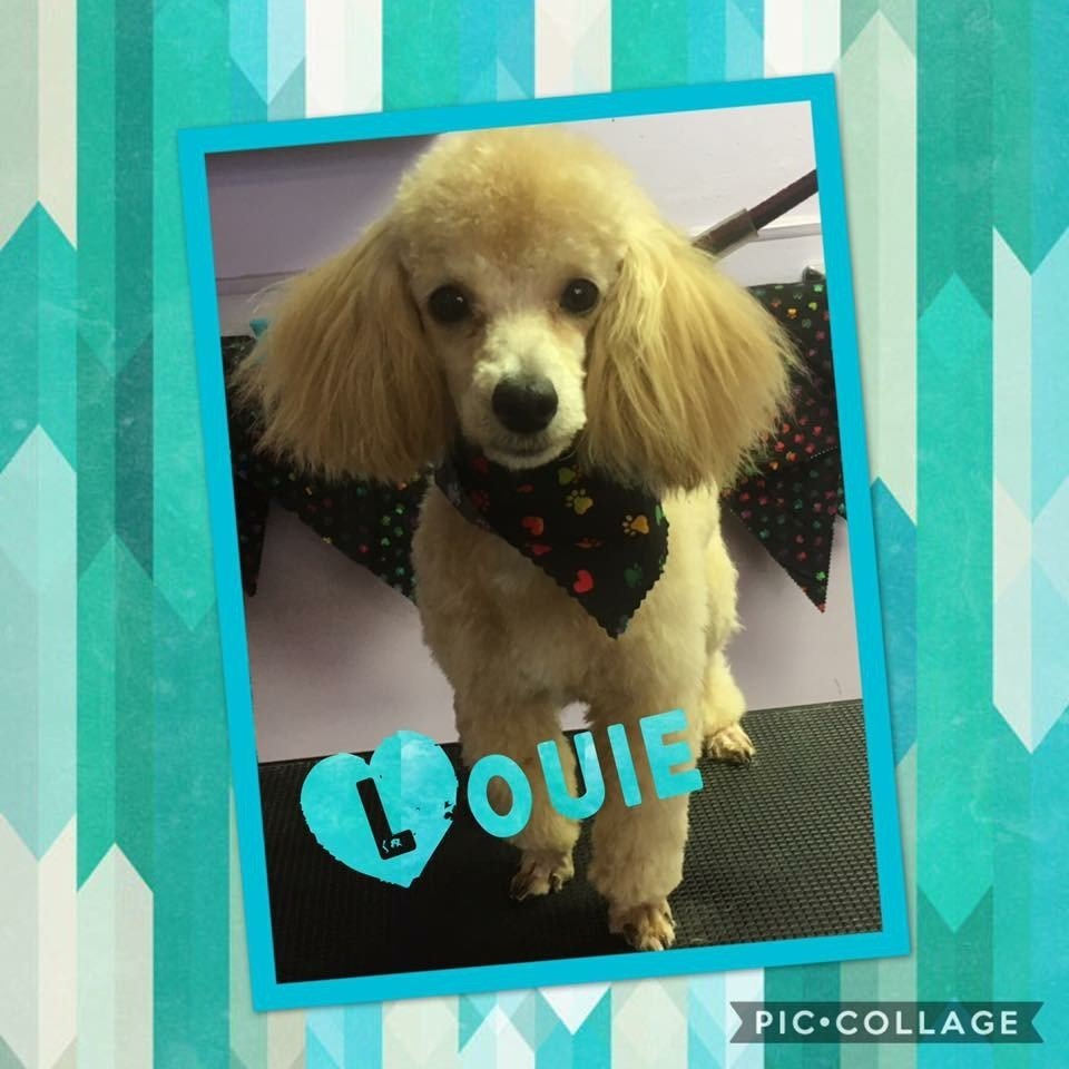 Paws & Claws Pet Grooming image 7