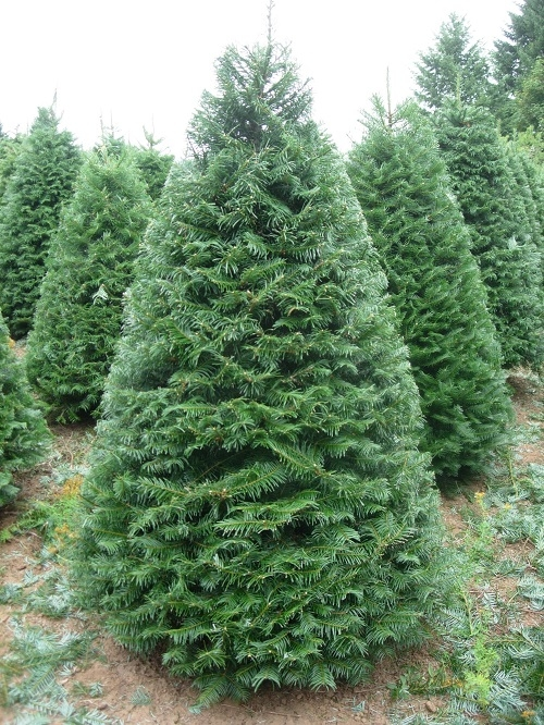 Crossties Tree Farm LLC image 1