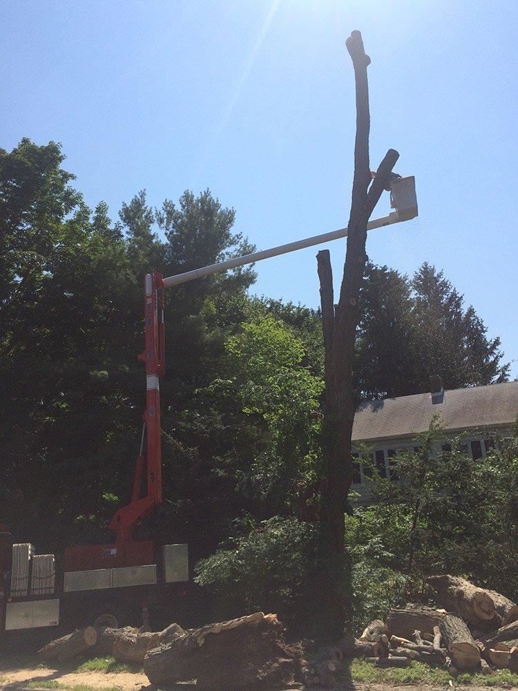 White Hills Tree Removal LLC image 4