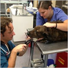 Northway Animal Emergency Clinic image 2