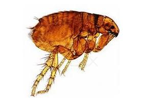 Strive Pest Control, Llc image 4