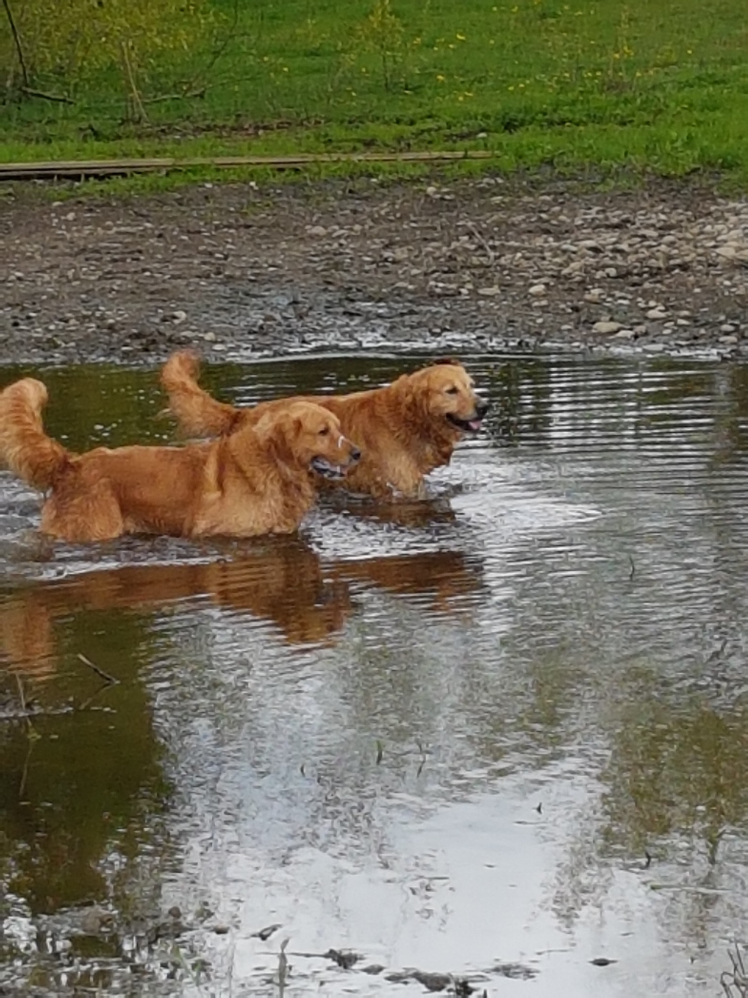 Puppy Trax in Aldergrove